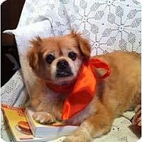 Adopt A Pet :: Pookie - Cumberland, MD