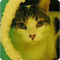 Adopt A Pet :: Cadilious - Brea, CA