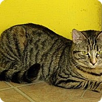 Adopt A Pet :: Nala - Mobile, AL