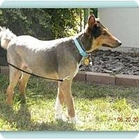 Adopt A Pet :: Sherlock - Trabuco Canyon, CA