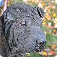 Adopt A Pet :: Lani-Moulan - Newport, VT