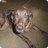 Adopt A Pet :: Cynder - Meridian, ID