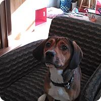 Adopt A Pet :: Mia - Hanna City, IL