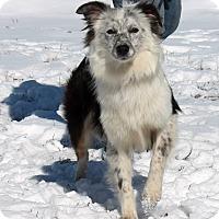 Adopt A Pet :: Lilah - Lebanon, CT