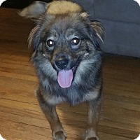 Adopt A Pet :: Cinnamon - Toledo, OH
