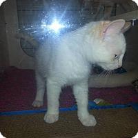Adopt A Pet :: Frankie - Stafford, VA