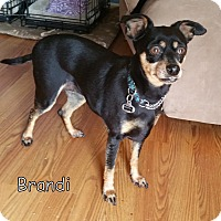 Adopt A Pet :: Brandi (courtesy posting) - Malaga, NJ