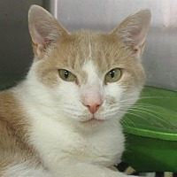 Adopt A Pet :: Garfield - Elkins, WV