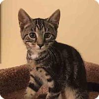 Adopt A Pet :: Arya - Gaithersburg, MD
