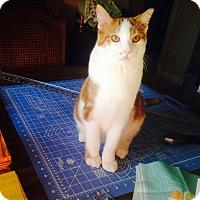 Adopt A Pet :: Vega - Toledo, OH