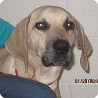 Adopt A Pet :: Remington - Westminster, MD