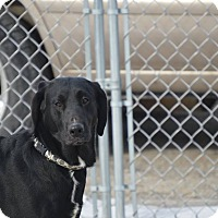 Adopt A Pet :: Blackie - Cedar Rapids, IA