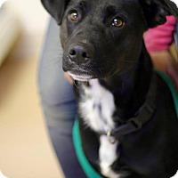 Adopt A Pet :: Margie - Harmony, Glocester, RI