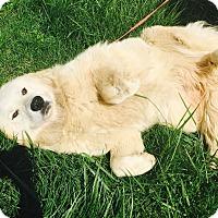 Adopt A Pet :: Cuddles - Hazard, KY