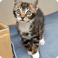 Adopt A Pet :: Tommy - San Francisco, CA
