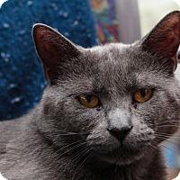 Adopt A Pet :: Lexington - Acushnet, MA