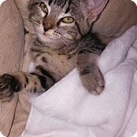 Adopt A Pet :: Rain - Fort Lauderdale, FL