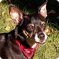 Adopt A Pet :: Ziggy - Greenfield, IN