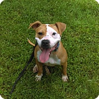 Adopt A Pet :: Sienna - South Park, PA
