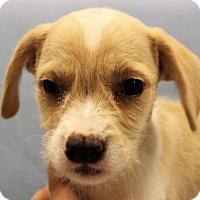 Adopt A Pet :: Jill (has split nose) - Modesto, CA