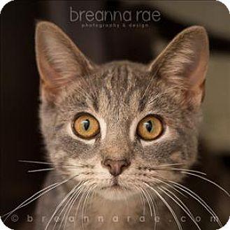 Domestic Shorthair Cat for adoption in Sheboygan, Wisconsin - Ernie