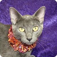 Adopt A Pet :: El - Jackson, MI
