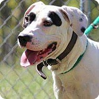 Boxer Mix Dog for adoption in Baltimore, Maryland - Reid