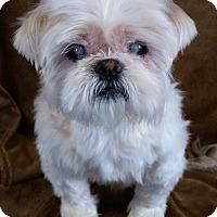 Adopt A Pet :: Swiper Turner - Urbana, OH