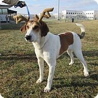 Adopt A Pet :: THOR - LaGrange, KY