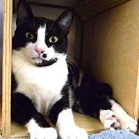 Adopt A Pet :: Eric - Houston, TX