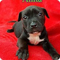 Adopt A Pet :: Anita - Pensacola, FL