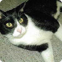 Adopt A Pet :: Wade - Overland Park, KS