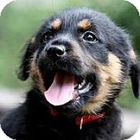Adopt A Pet :: Lovely - Austin, TX