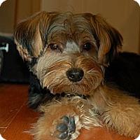Adopt A Pet :: Mason - Charlotte, NC