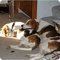 Adopt A Pet :: Lola #2 - Novi, MI
