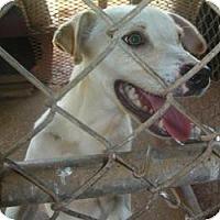 Adopt A Pet :: Smitty - dawson, GA