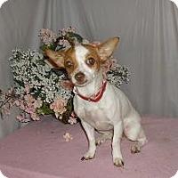 Adopt A Pet :: Princess - Chandlersville, OH