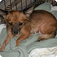 Adopt A Pet :: Tiki - East Sparta, OH