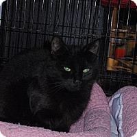 Adopt A Pet :: Annie - East Brunswick, NJ