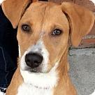 Adopt A Pet :: SIA (video)