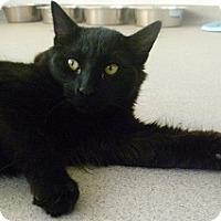Adopt A Pet :: Patrick Sean - Hamburg, NY