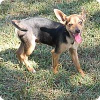 Adopt A Pet :: Baby - Umatilla, FL