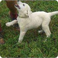Adopt A Pet :: Vega - Lincolndale, NY