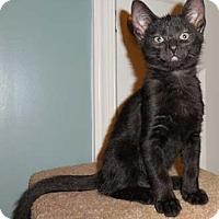 Adopt A Pet :: Roscoe - Merrifield, VA