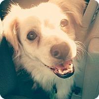 Adopt A Pet :: Lena - San Diego, CA