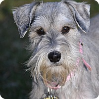 Adopt A Pet :: Bonnie - Sharonville, OH