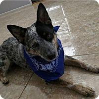 Adopt A Pet :: ZERO (Courtesy List) - San Pedro, CA