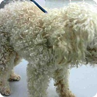 Adopt A Pet :: SANDERS - Conroe, TX