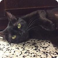 Adopt A Pet :: Little Miss Sunshine - Cranston, RI