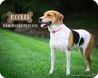 Coonhound Mix Dog for adoption in Newport, Kentucky - Moolah